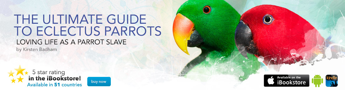 The Ultimate Guide to Eclectus Parrots - Information and