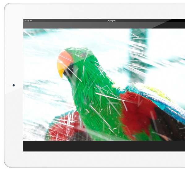 Guide to Eclectus parrots available on the iPad